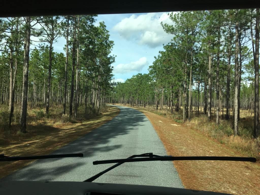 Entrance into Suwannee River State Park