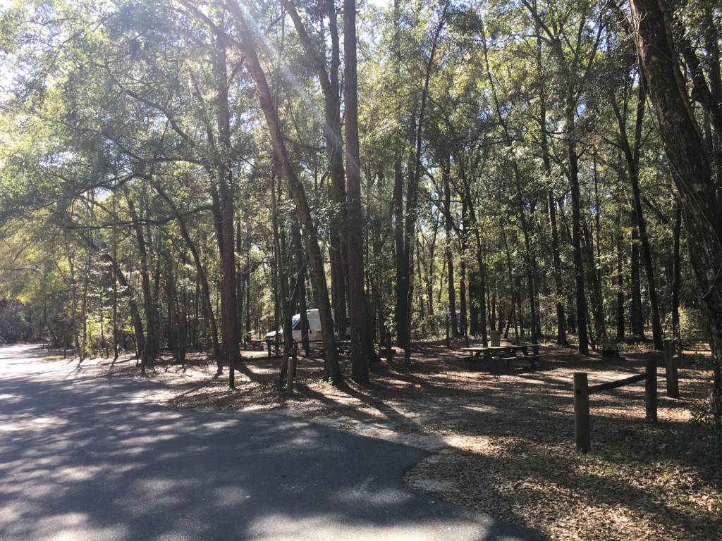Trees between campsites at Suwannee River State Park.
