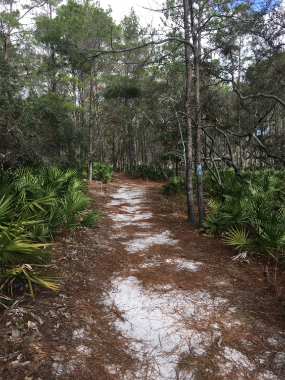 Hiking path near Grayton Beach State Park