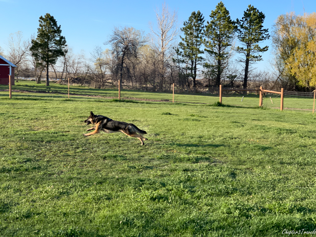 Dog park at Sleepy Hollow RV Park in Wall, South Dakota
