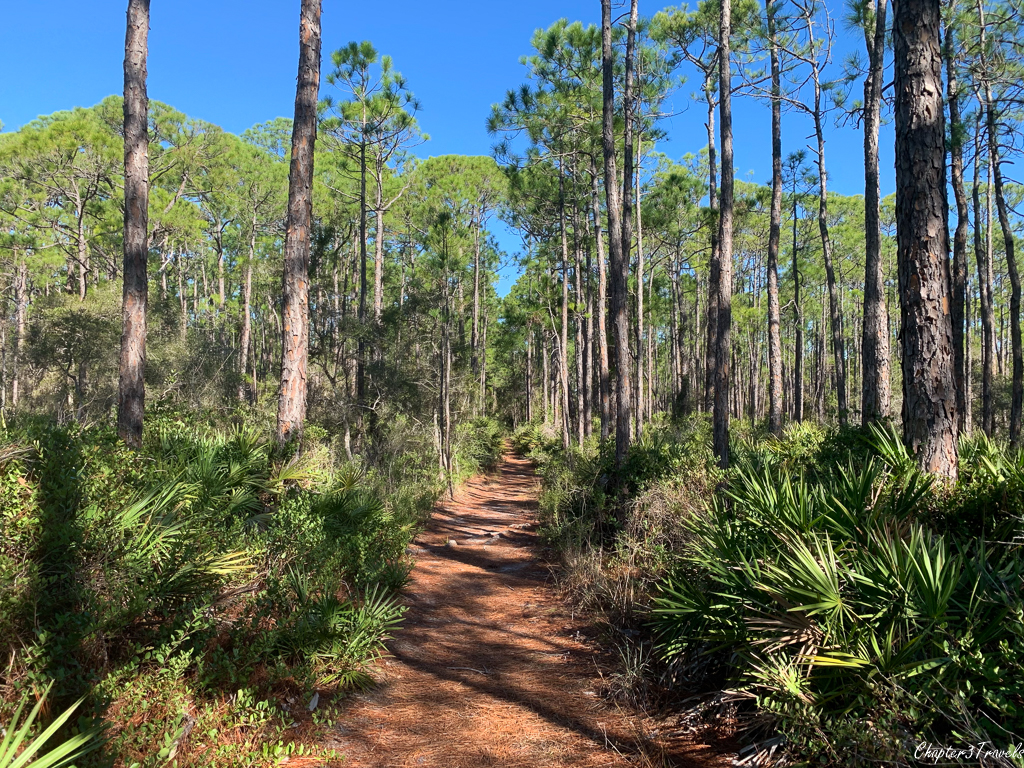Trail in Topsail Hill Preserve State Park
